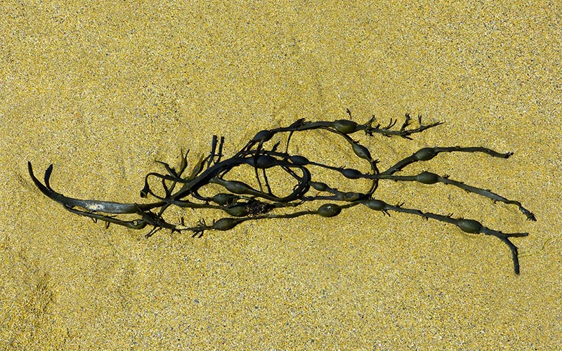 The Power of Seaweed in Skin Care