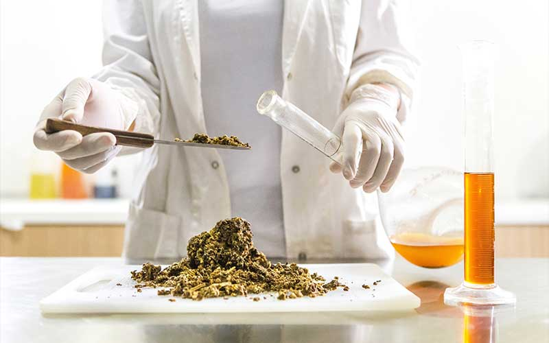 Seaweed Extracts Used in Skincare Products