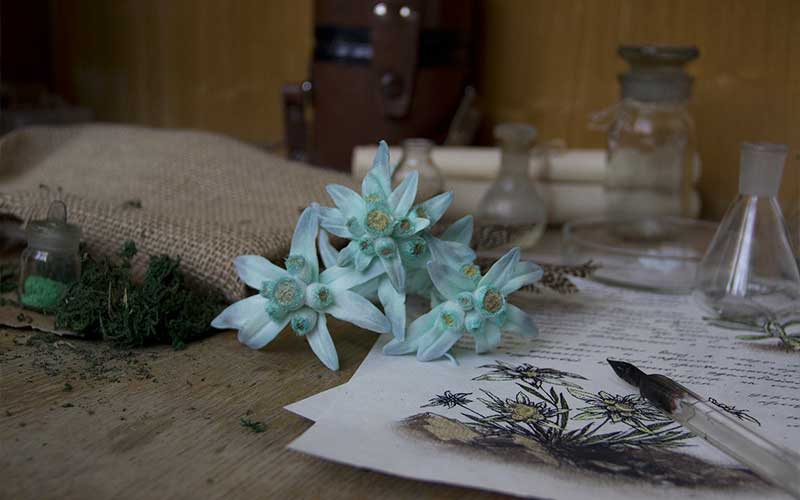 Other Cosmetic Uses Of Edelweiss